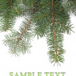 Christmas tree branches border — Stock Photo