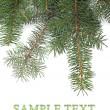 Christmas tree branches border — Stock Photo #8057905