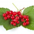 Redcurrants — Stock Photo #8071477