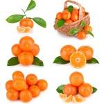Set of fresh mandarin fruits with leaves — Stock Photo #8073109