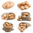 Set of ripe harvest potatoes vegetable in burlap sack — Stock Photo