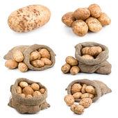 Set of ripe harvest potatoes vegetable in burlap sack — Stock Photo