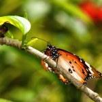 Butterfly in garden — Stock Photo