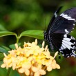 Beautiful butterfly — Stock Photo #9762488