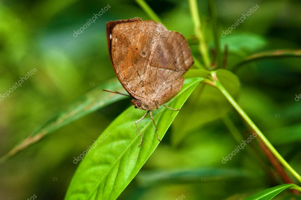 A beautiful butterfly insect  in the garden — Stock Photo #9762563