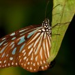 Stock Photo: Butterfly in garden