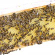 Bees in hive. — Stock Photo