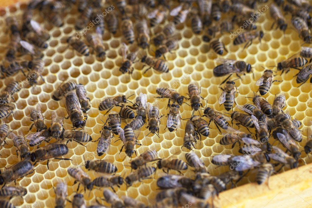 Bees in beehive. — Stock Photo #10617472