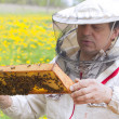 Stock Photo: Beekeeper.