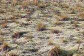 Dry grass. — Stock Photo