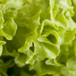 Lettuce salad. — Stock Photo