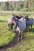 Wild horses. — Stock Photo