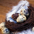 Easter feather eggs — Stockfoto