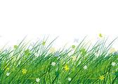 Zielona łąka, wzór dla projektu — Wektor stockowy