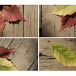 Autumn leaf collection for your design — Stock Photo