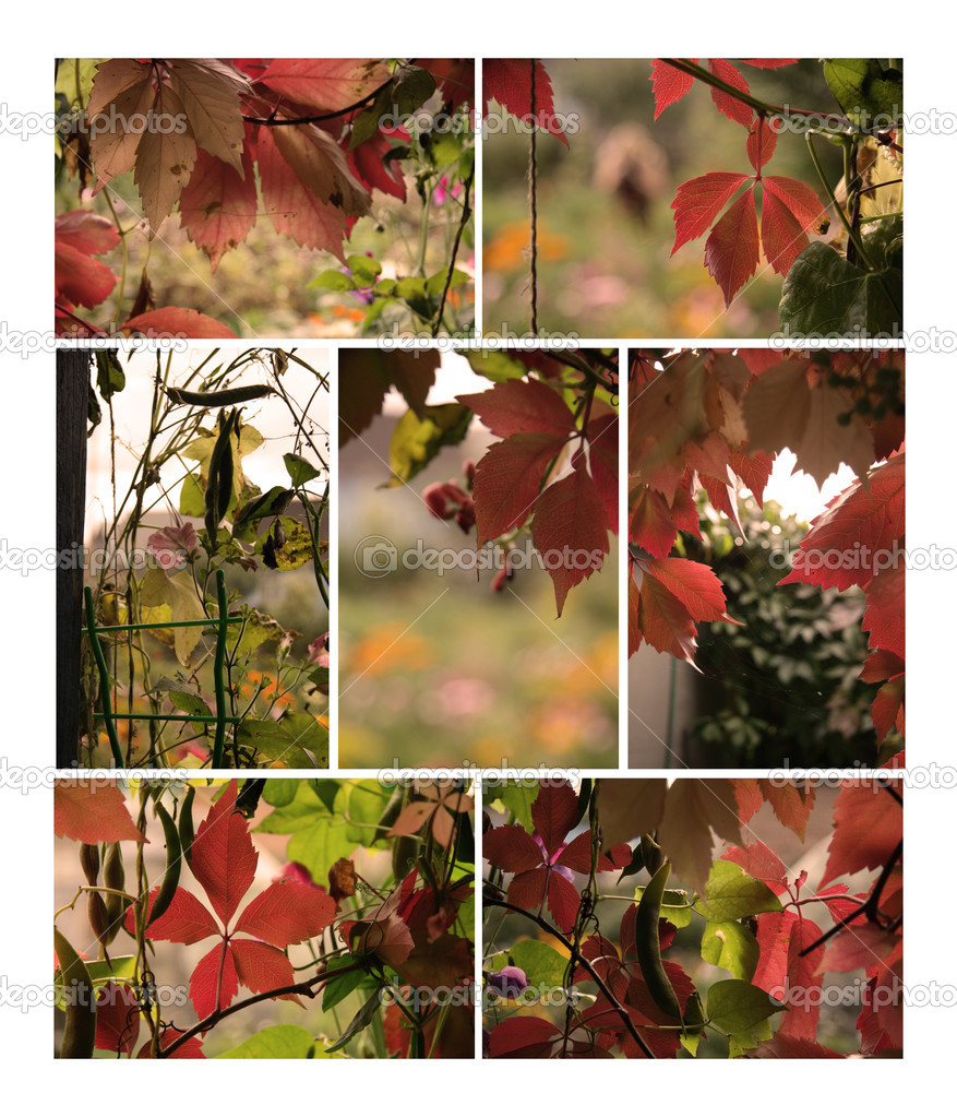 Autumn plants collection for your design — Stock Photo #9765143