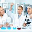 Stock Photo: Young scientists working in laboratory