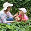 mor och dotter trädgårdsskötsel tillsammans — Stockfoto