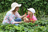 Mother and daughter gardening together — Stock Photo