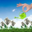 Human hand watering money tree — Stockfoto
