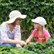 Mother and daughter gardening together - Stock Photo
