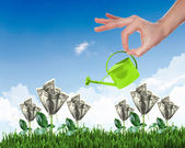 Human hand watering money tree — Stock Photo