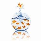 Gold fish together — Stock Photo