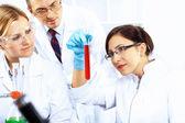 Scientists in laboratory — Stock Photo