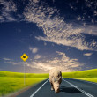 Stock Photo: Rhino walking along road