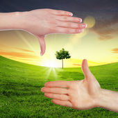 Human hands and green plant — Stock Photo