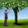 Money tree and young business mans — Stock Photo