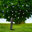 Money tree and young business mans — Stock Photo #9222177