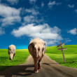 Stock Photo: Elephant walking along road
