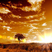 сельский пейзаж и сияющим солнцем — Стоковое фото