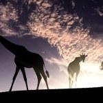African animals in savannah — Stock Photo