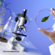 Green plants in biology laborotary — Stock Photo #9916802
