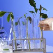 Green plants in biology laborotary — Stock Photo #9916813