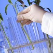 Green plants in biology laborotary - Stock Photo