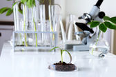 Green plants in biology laborotary — Stock Photo