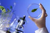 Piante verdi in biologia laborotary — Foto Stock