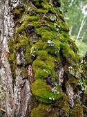 Point de riz sur un tronc d'arbre — Photo