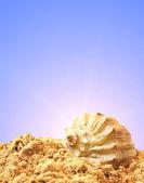砂の上のシェル — ストック写真