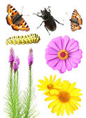 Set of flowers and insects — Stock Photo
