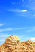 Coquille sur le sable — Photo