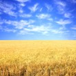 Royalty-Free Stock Photo: Crop of rye