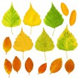 Leafs of a birch and barberry - 图库照片