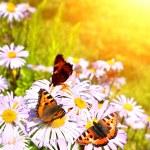 Butterflys — Stock Photo #9458896