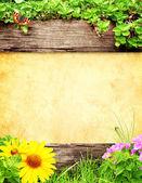 夏天背景 — 图库照片