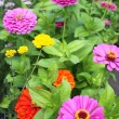 Spring flowerbed — Stock Photo #9823648
