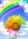 Rainbow — Foto de Stock